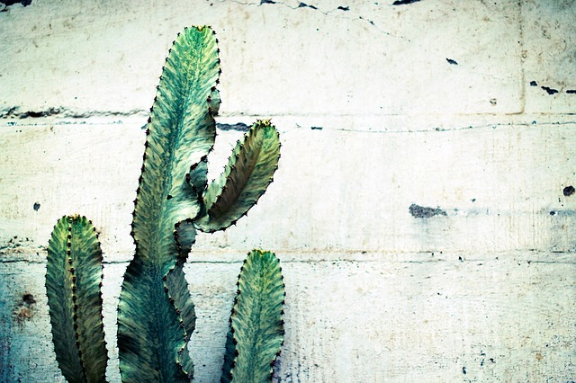 kaktus Cowboy