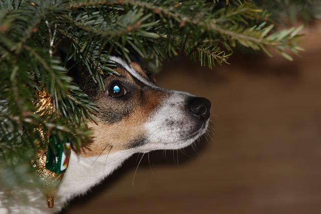 hund juletre