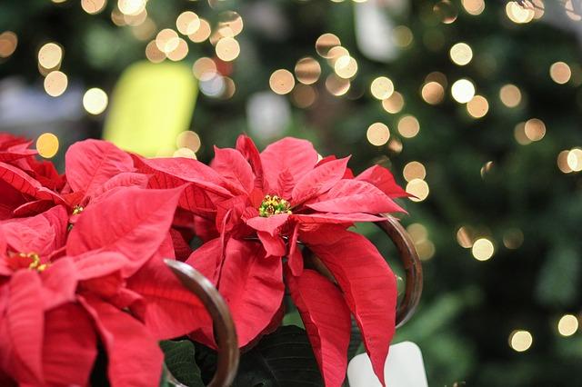 julestjerne 4