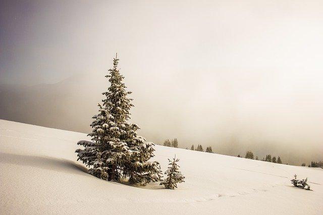 snø juletre