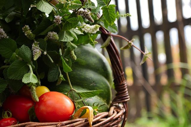 jordbær plante