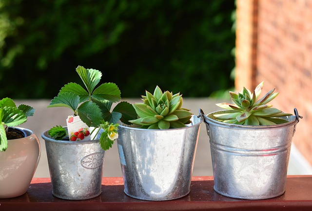 jordbær potte